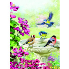 Country Cards 10391 Blank Birds