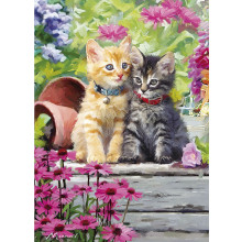 Country Cards 10434 Open Cats