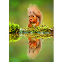 Country Cards 10525 Open Squirrels