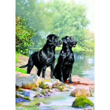 Country Cards 10530 Open Dogs