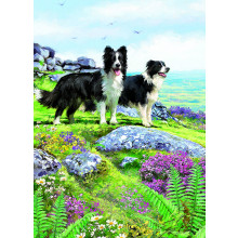 Country Cards 10558 Open Dogs