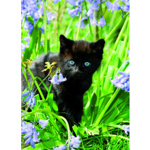 Country Cards 10611 Open Cats