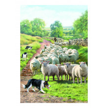 Country Cards 10627 Open Farm
