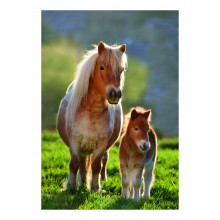 Country Cards 10633 Open Horses