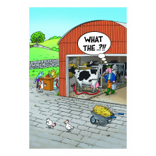 Country Cards 10643 Open Humour