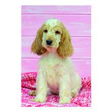 Country Cards 10671 Open Dogs