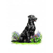 Country Cards 10679 Open Dogs