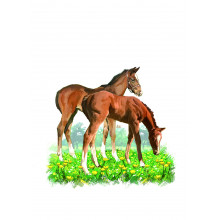 Country Cards 10680 Open Horses