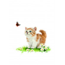 Country Cards 10681 Open Cats