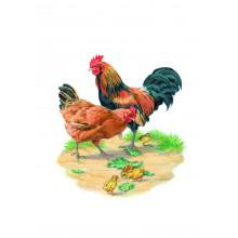 Country Cards 10683 Open Birds
