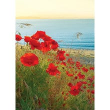 Country Cards 10722 Blank Poppies