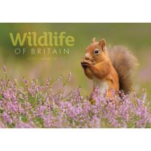 DD01009 A4 Calendar Wildlife Of Britain