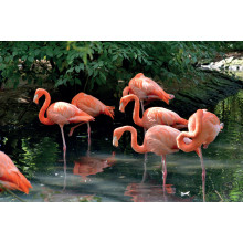 1000pc Jigsaw Puzzle Flock Of Flamingoes